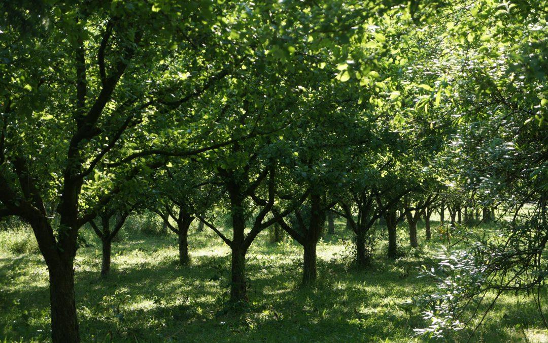 Beskär dina träd